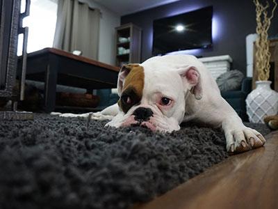 ペットと暮らす家におすすめな機能性カーペット